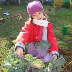 Есть у нас огород и капуста там растет